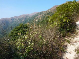 Hong Kong / Lantau Island / Mui Wo to Sunset Peak