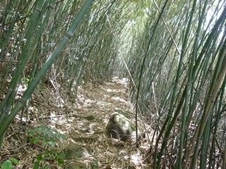 Hong Kong / New Territories / Yin Ngam Bamboo Trail