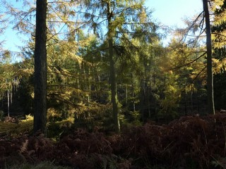 England / Staffordshire / Cannock Chase - Sherbrook Trail