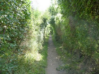 England / The Thames Path / Cholsey to Tilehurst