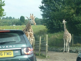 England / West Midlands / West Midlands Safari Park